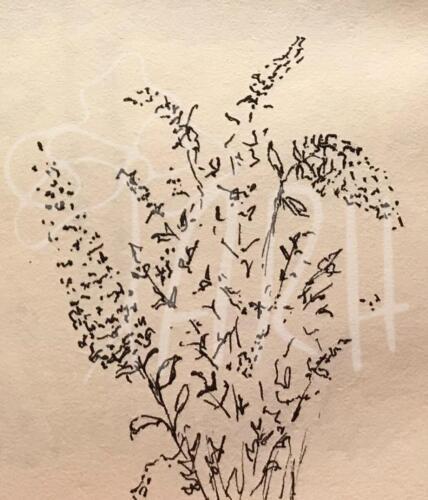 Sommerfugle busk